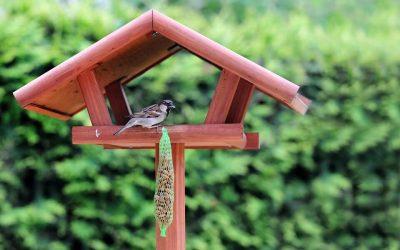 Elkezdődött a madáretetési szezon, de nem mindegy, mivel etetünk!